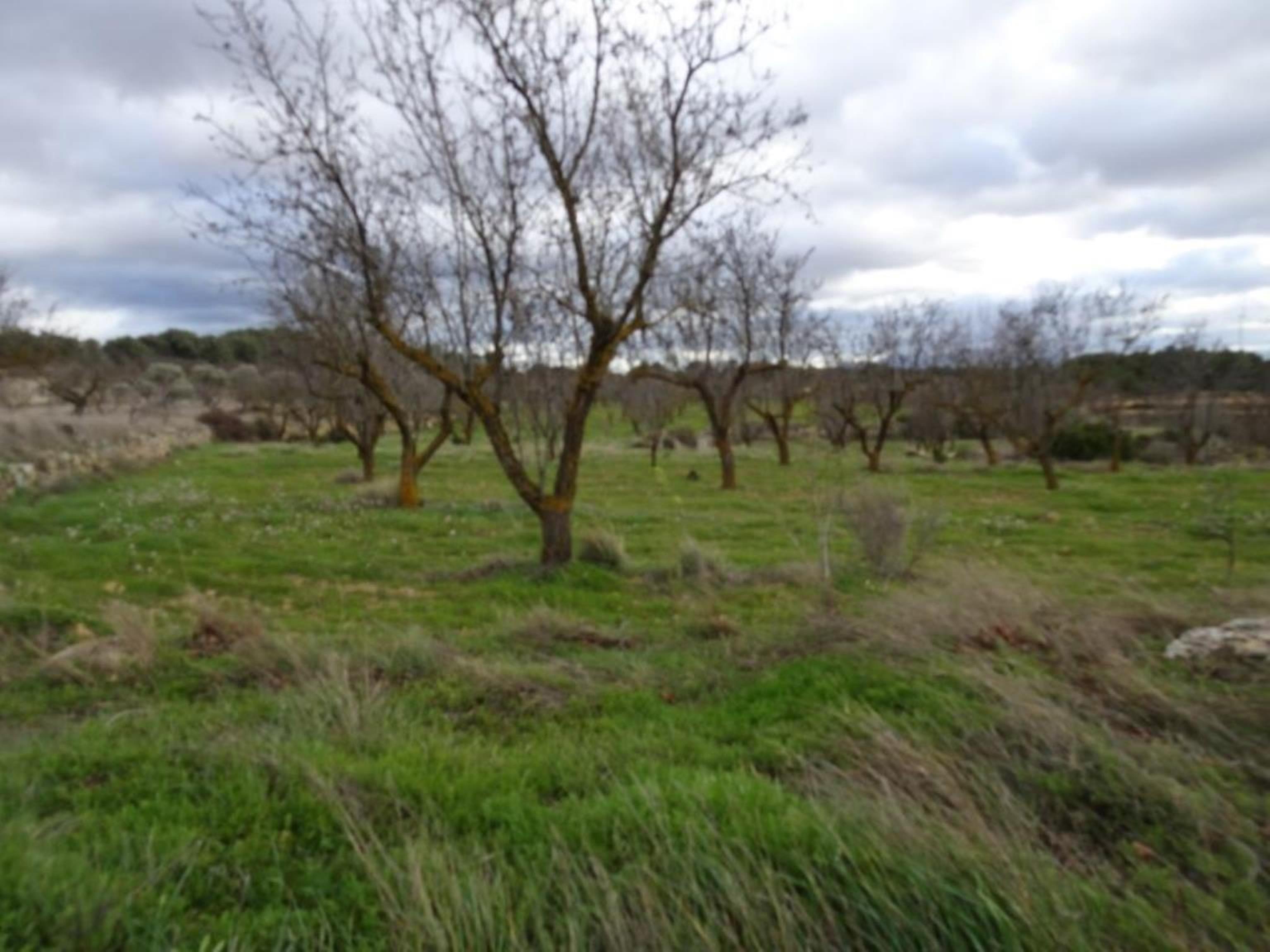 GANDESA, ,Masia,Rústica,GANDESA,1106