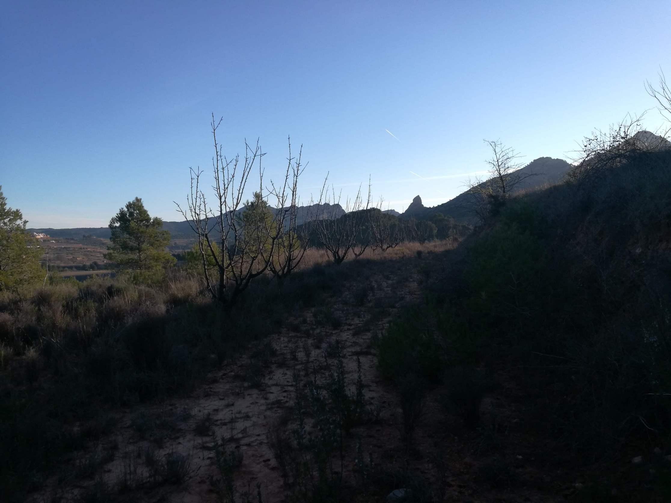 TERRA ALTA, ,Finca Rústica,Rústica,TERRA ALTA,1109