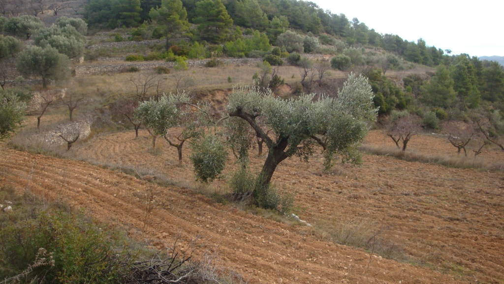 CORBERA D'EBRE, ,Finca Rústica,Rústica,CORBERA D'EBRE,1116