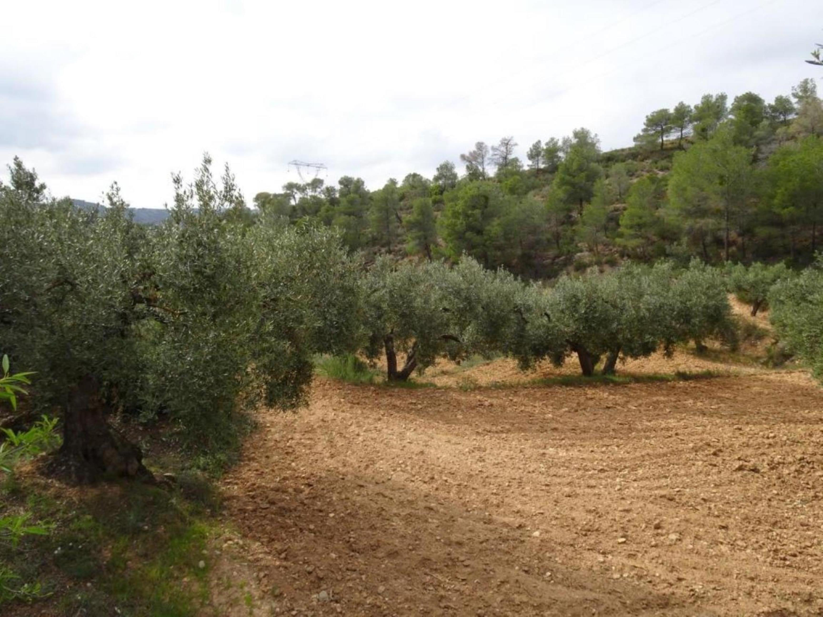 CORBERA D'EBRE, ,Finca Rústica,Rústica,CORBERA D'EBRE,1128