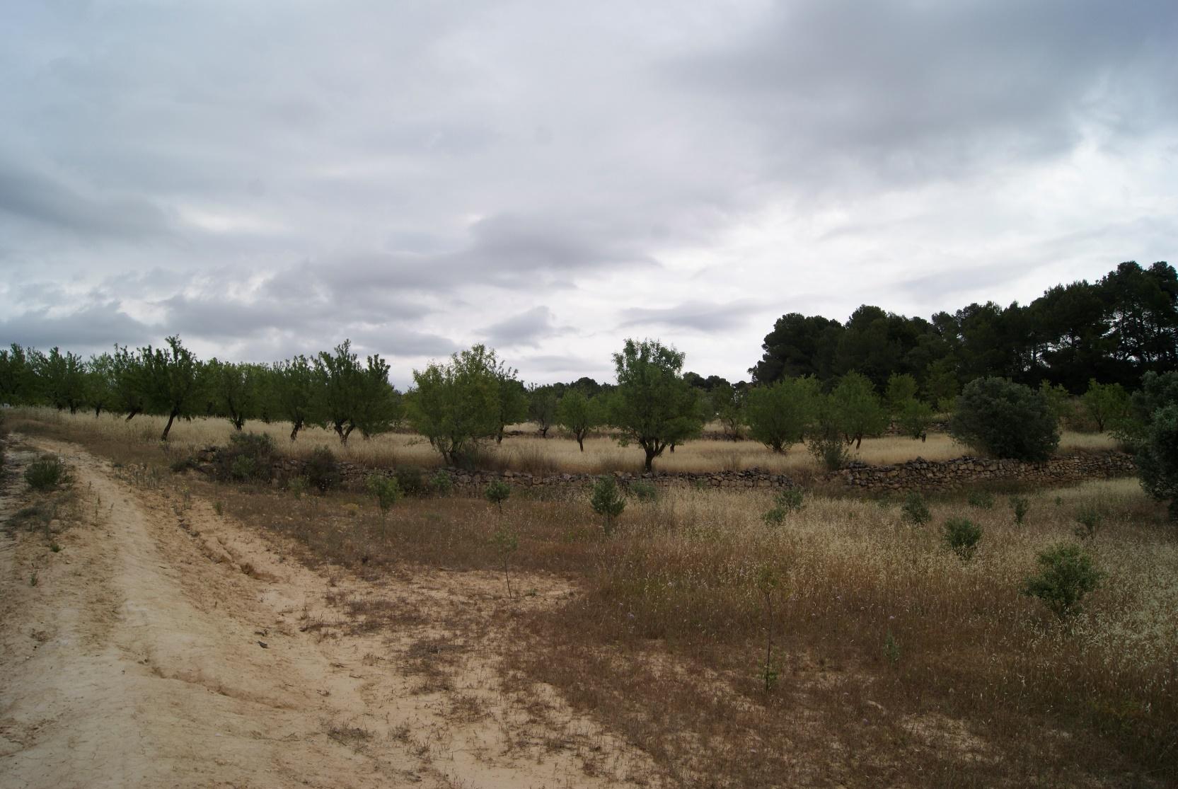 gandesa, ,Maset,Rústica,gandesa,1143