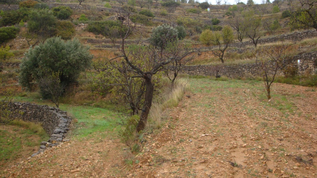 corbera d'ebre,Caseta soterrada,corbera d'ebre,1028