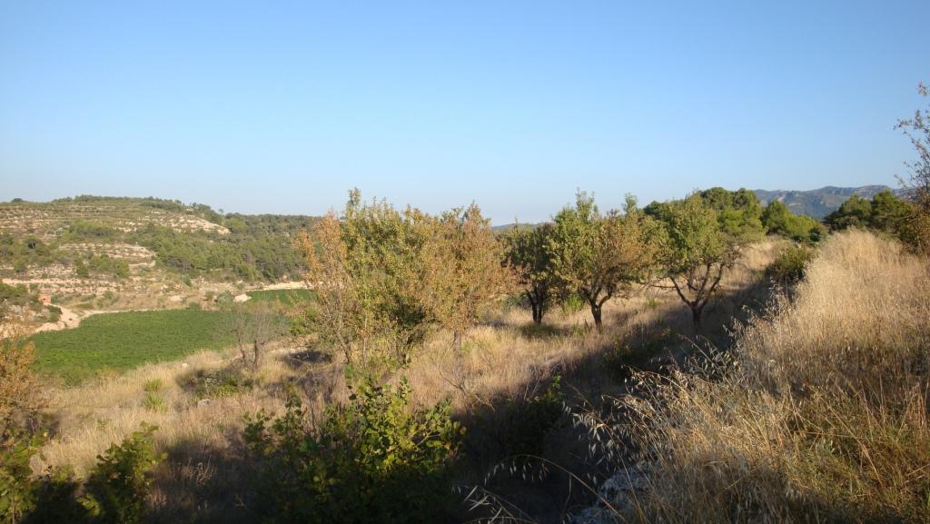 corbera d'ebra, ,Finca Rústica,Rústica,corbera d'ebra,1031