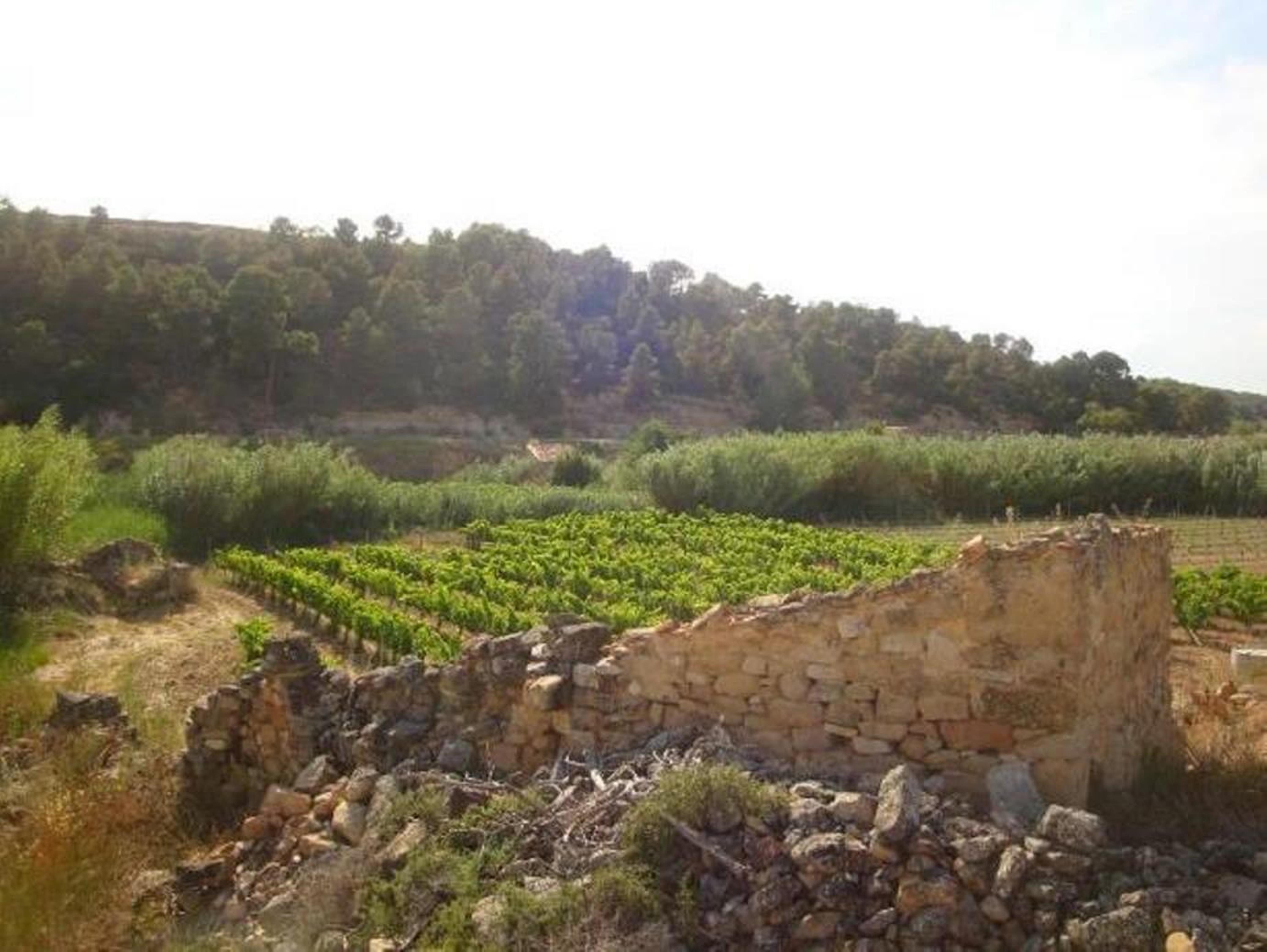 Batea, ,Caseta d'eines,Rústica,Batea,1053